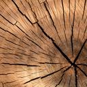 """Аватар сообщества """"Работа с деревом"""""""