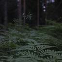 """Аватар сообщества """"Растения для души"""""""