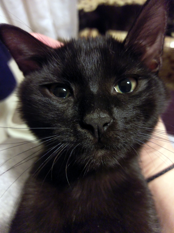 Морти, ушастое тыгыдынское чудище. Кот, Котомафия, Фото на тапок, Черный кот