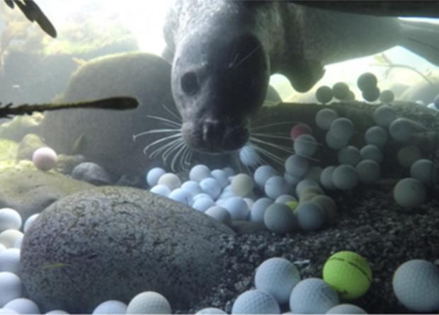 Фридайверы достали из Тихого океана две с половиной тонны мячиков для гольфа Новости, Экология, Дайвинг, Гольф, Хобби