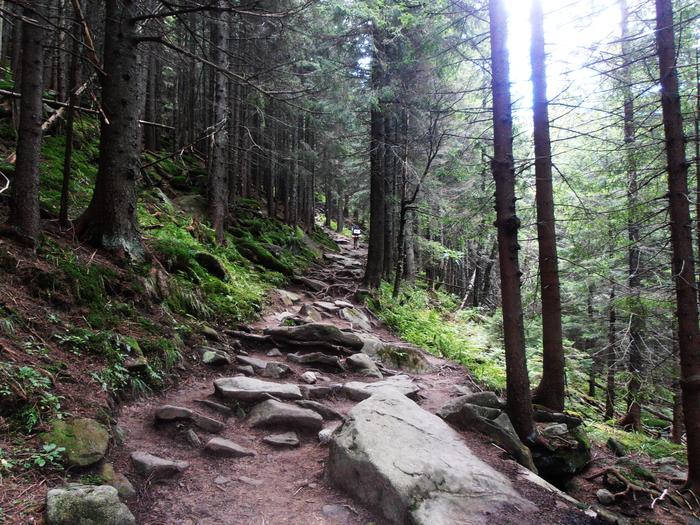 Загадочный Карпатский лес Лес, Карпаты, Природа, Фотография
