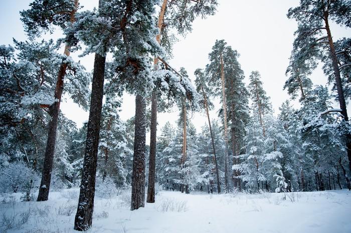 Зимний лес. Природа, Лес, Nikon, Tamron, Фотография