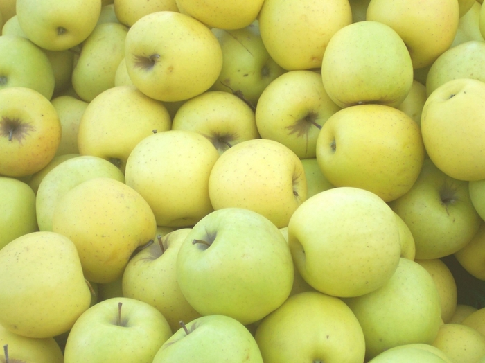 Продуктовый ликбез: пытаемся разобраться в оттенках яблочного Продуктовый ликбез, Яблоки, Сорта яблок, Длиннопост