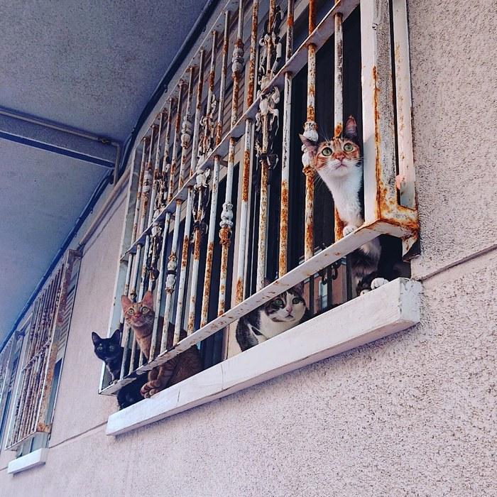 Испанские кисы Кот, Испания, Красота