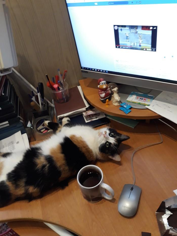 И снова котариус. Трехцветная кошка, Кот, Котомафия, Стихи