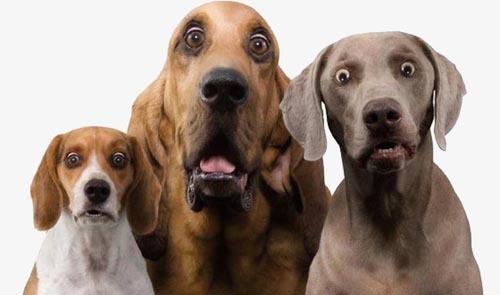 Владельцы псов украшают интимные части тела своих питомцев, делая их блестящими Животные, Мода, Собаки и люди, Длиннопост