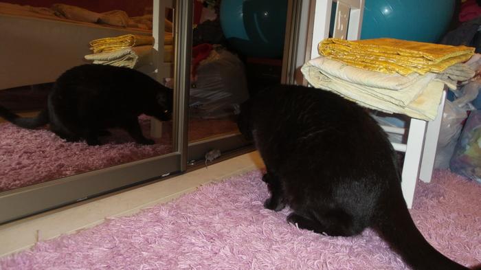 Том и Джери Котомафия, Забыл как убивать, Тот еще охотник, Кот, Мышь