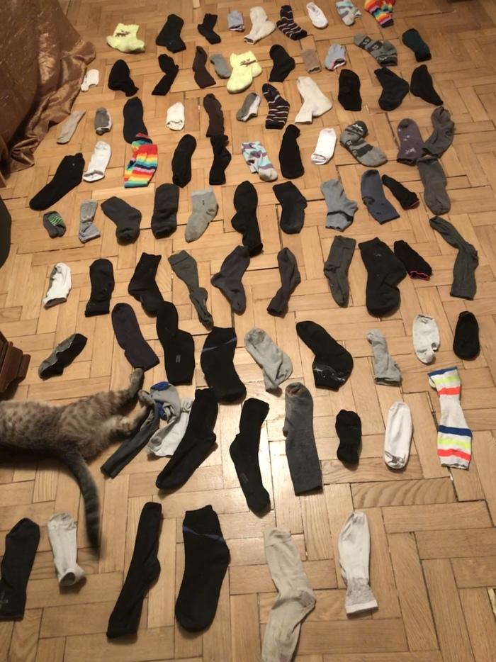 Где мои носки?! Носки, Найди пару, Проблема, Кот, Пара, Смех, Жизнь, Настоящий мужик, Длиннопост
