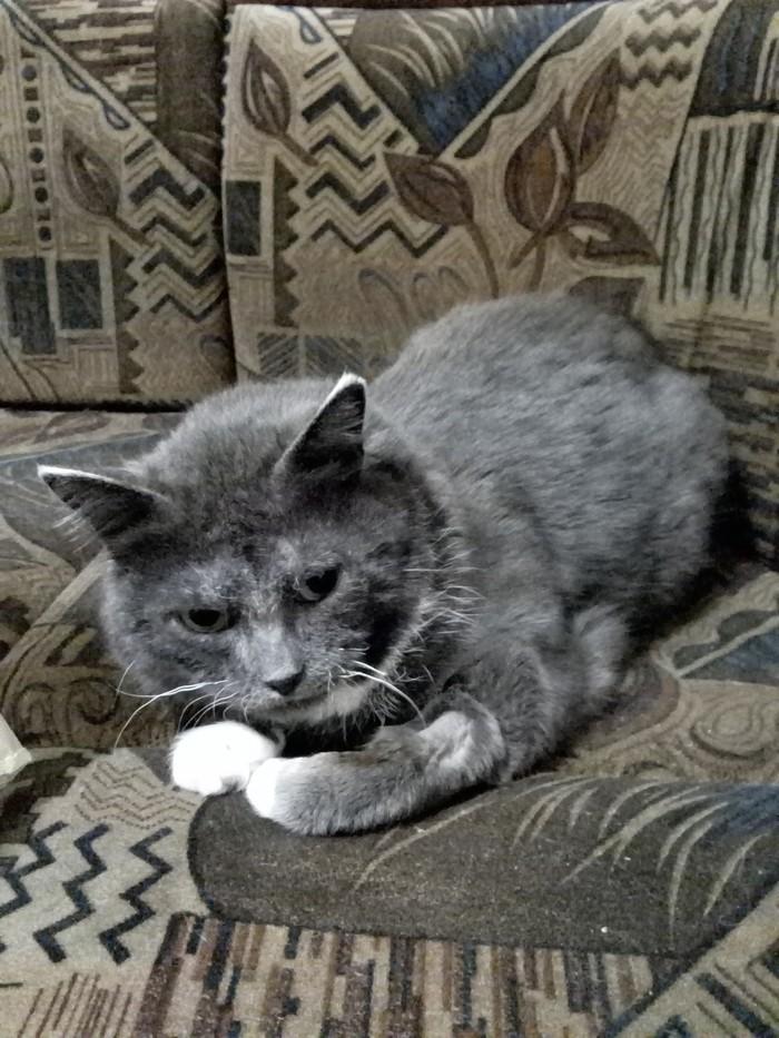 Кошка-отморожка. Продолжение Котомафия, Спасение животных, Длиннопост, Кот
