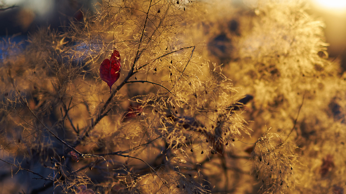 О простых и сложных жанрах в фотографии. Фотография, Трава, Листья, Осень, Контровой свет, Крупный план, Поговорим о, Длиннопост