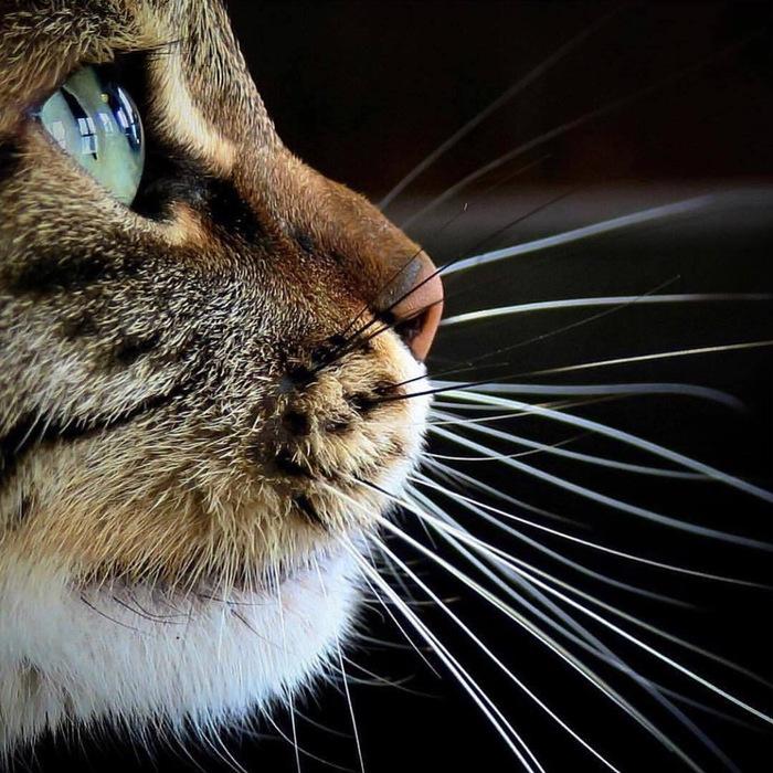 Котик Фотография, Животные, Кот, Профиль, Взгляд, Глаза, Amir Leshem