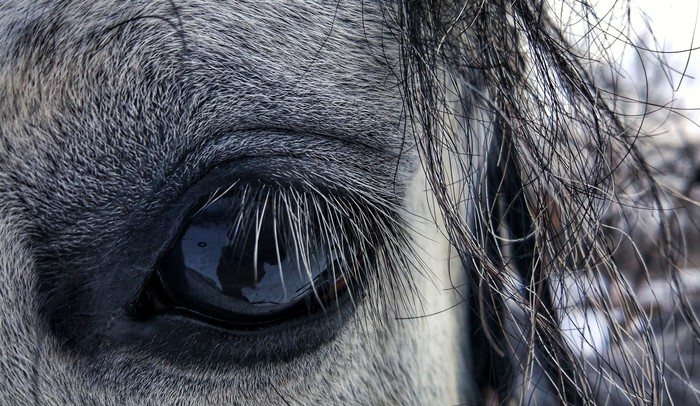 Конь...