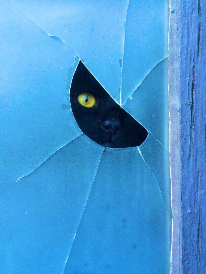 Большой кот следит за тобой... Фотография, Кот, Слежка