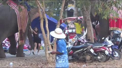 Слон с девушкой на бивне разгромил ярмарку в Таиланде Общество, Таиланд, Животные, Слоны, Погром, Ярмарка, Вести, Гифка, Видео, Новости