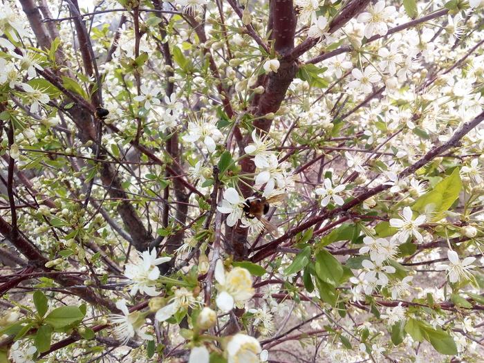 В ожидании весны, нового года, нового сезона и малышей))) Гусь, Весна, Цветение, Длиннопост