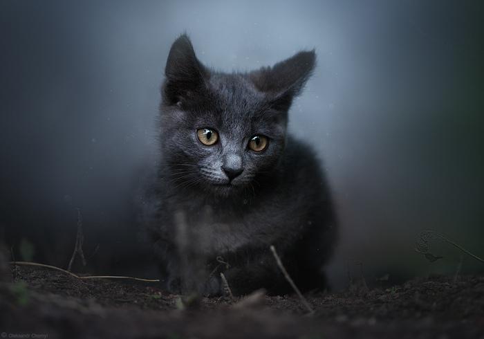 Котик в тумане...