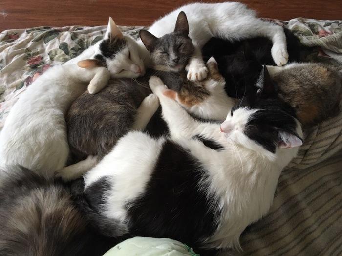 17 февраля - День спонтанного проявления доброты Кот, Котомафия, С праздником, Поздравление, Доброта, Приют Три Товарища, Котята, Без рейтинга