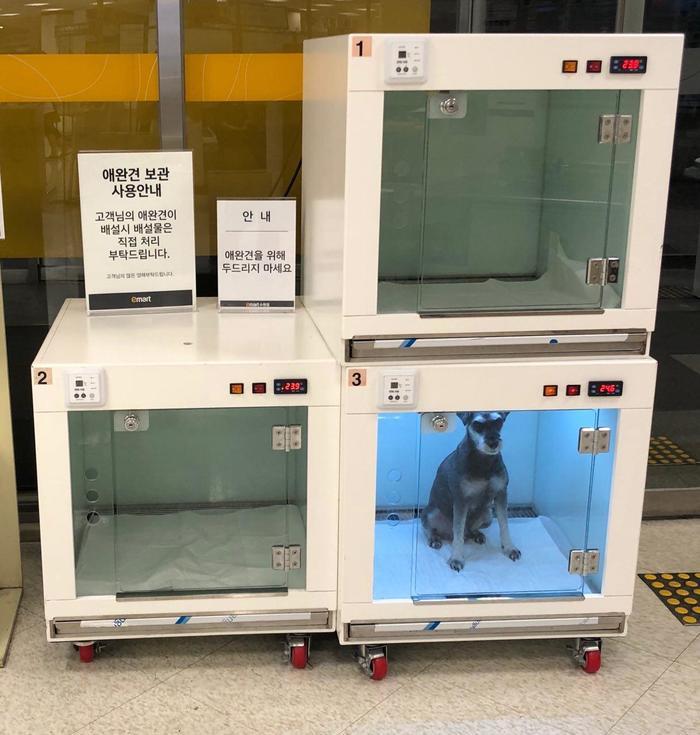 Камера хранения животных в супермаркете Супермаркет, Южная Корея, Собака, Камера хранения