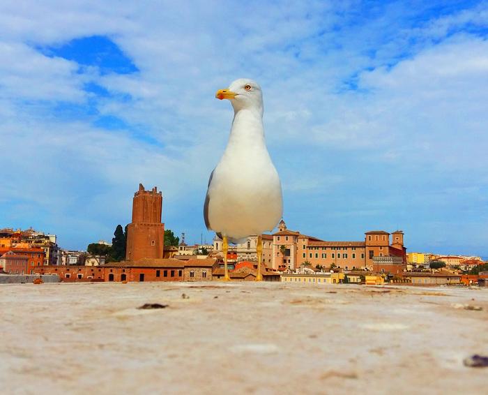 Римская чайка Рим, Путешествия, Чайки, Вечный город, Море, Тибр