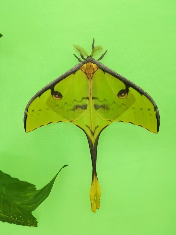 Выставка бабочек как бизнес. Часть 4 из 7. Агрессивный маркетинг! Бизнес, Как мы начинали свой бизнес, Длиннопост