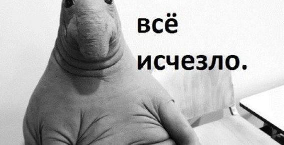 Российская метеогруппировка «умерла» Росгидрометцентр, Метеорология, Роскосмос, Сломал систему