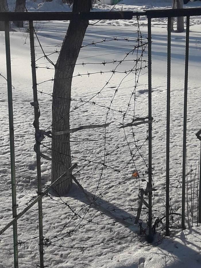 Дырка в заборе в детском саду Колючая проволока, Детский сад, Дыра, Новокузнецк