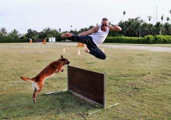 Жан-Клод Ван Дамм и его 9 собак Жан-Клод Ван Дамм, Животные, Собака, Вегетарианство, Длиннопост