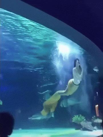 Новые обитатели океанариума