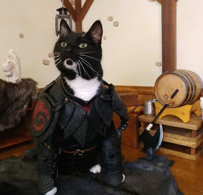 Кото-Иккинг Кот, Косплей, Как приручить дракона, Twitter, Иккинг