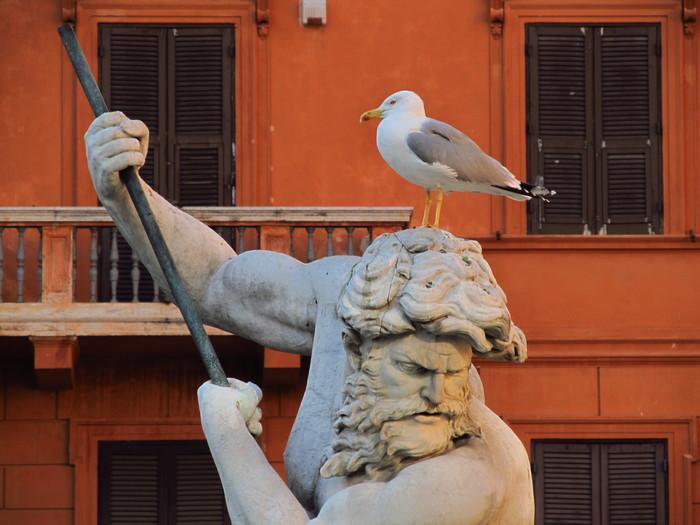 Чайки Рима. Чайки, Рим, Длиннопост