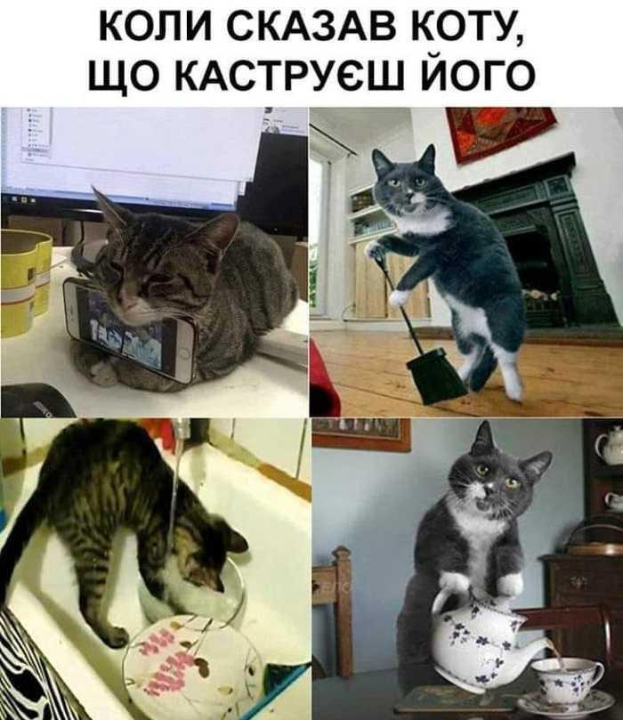 Когда сказал коту, что кастрируешь его Кот, Картинки, Домашние животные
