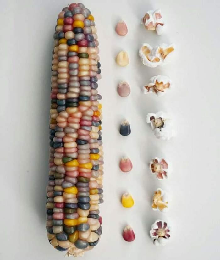 Разноцветный попкорн