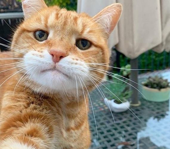 Когда кот селфится круче, чем ты Кот, Рыжая морда, Селфи, Домашние животные