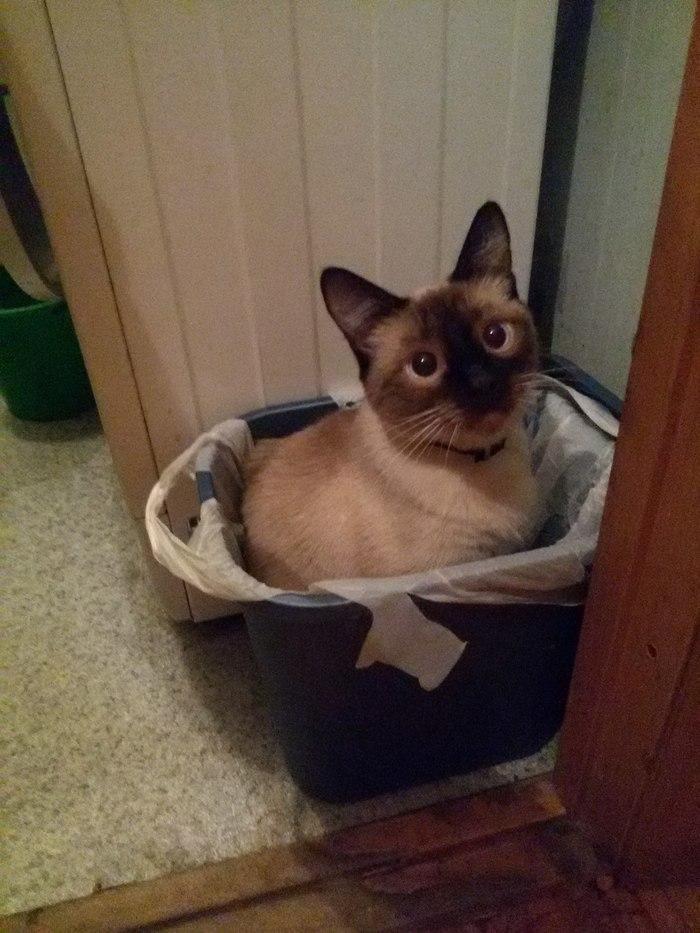 Он не очень умненький Кот, Мусорка