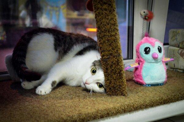 Я не люблю эту кошку Кот, Котоистории, Котокафе, Красноярск, Длиннопост