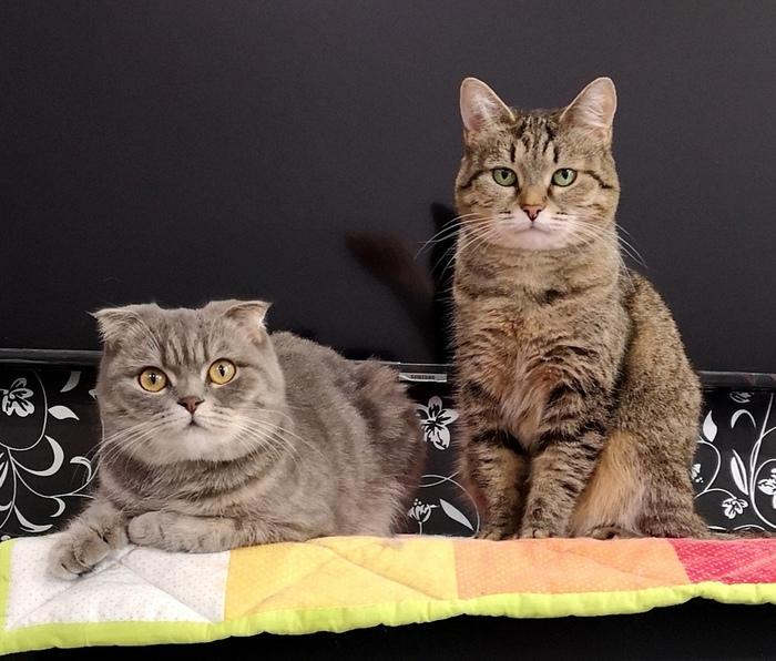 Кошки и фитнес браслет Кот, Сон, Фитнес-Браслет, Эксперимент, Длиннопост, Домашние животные