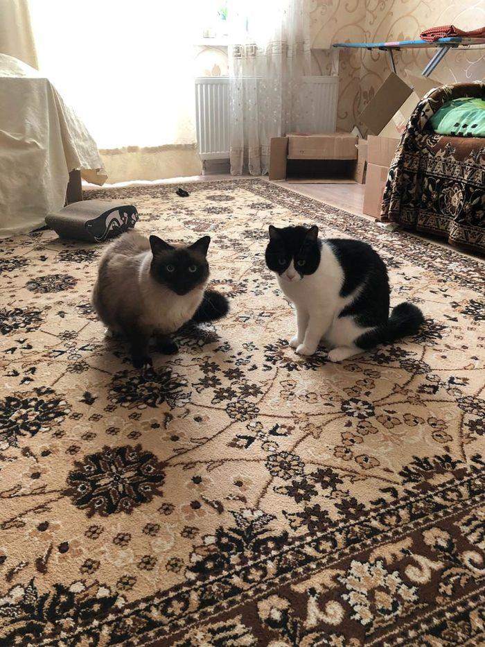 Клёпа нашла свой дом Я уже дома, Спасибо, Клёпа, Длиннопост, Без рейтинга, Кот, Домашние животные