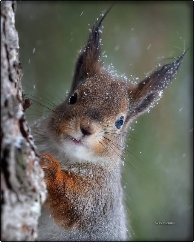 Орехи есть?