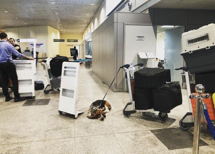 О самом удивительном путешествии Барона. ч. 2 Переезд, Путешествия, Собаки и люди, Барон, Длиннопост