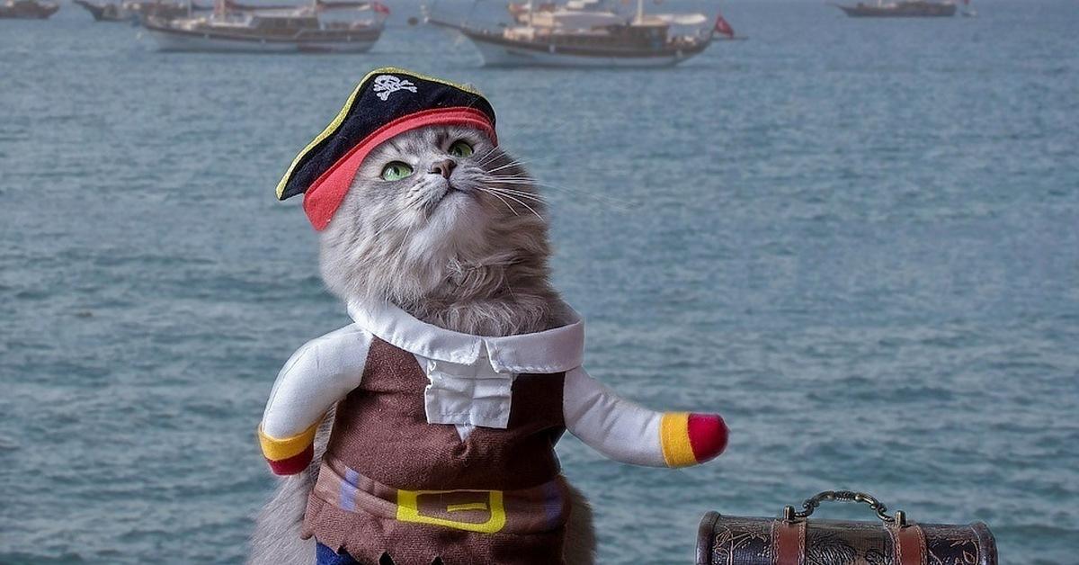 работа фото прикольное про пиратов будет рада