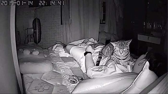 Ночной охранник Кот, Хозяин, Ночная съемка, Усатый-Полосатый, Длиннопост