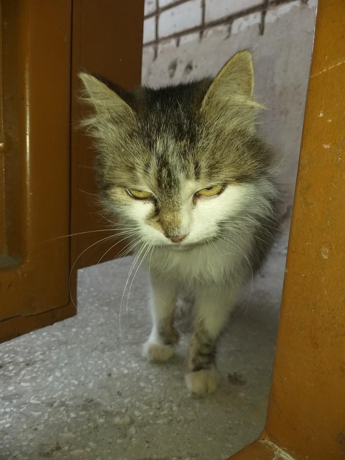Когда вернулся с работы уставший... Кот, Подъезд, Взгляд, Усталость