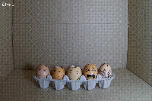 Трава в яйцах Яйца, Таймлапс, Трава, Лицехват, Гифка