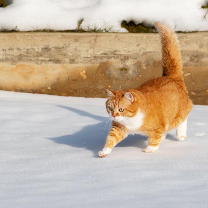 Рыжий по пятницам! Кот, Котомафия, Котята, Длиннопост, Видео