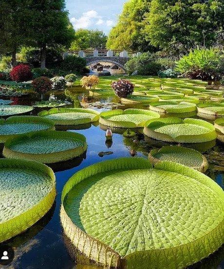 Парк в Токио