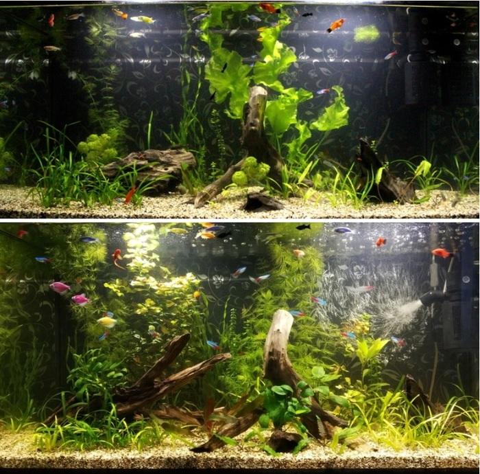 Аквариумный юбилей - 1 год (Много фото) Аквариум, Аквариумные рыбки, Кот, Попугай, Улитка, Трое детей, Длиннопост, Домашние животные