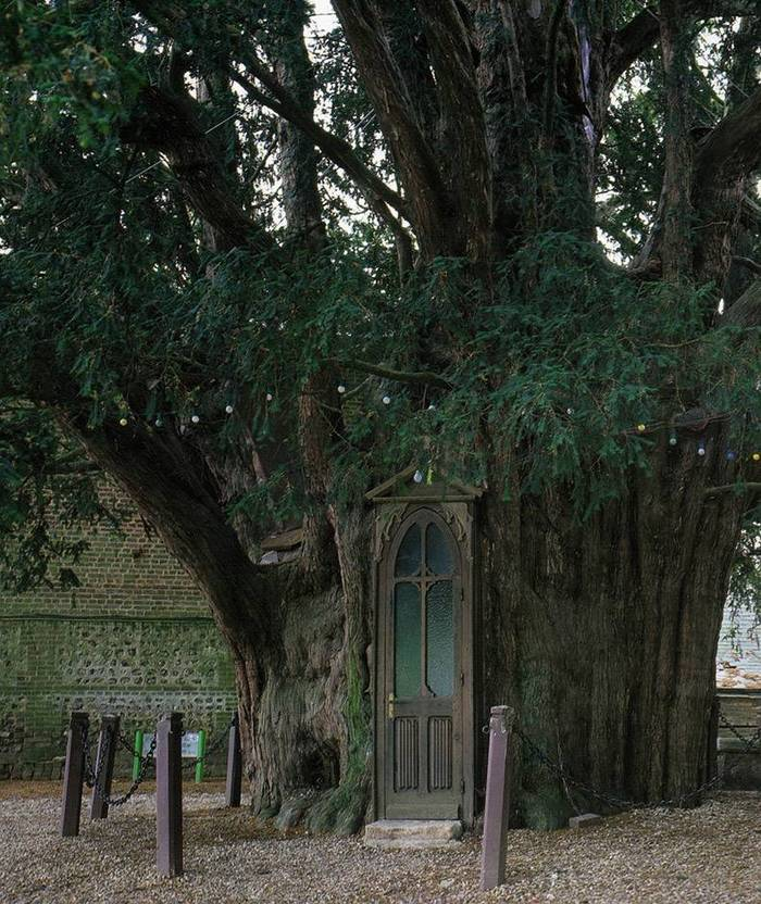 Часовня Св. Анны в стволе дерева, Франция