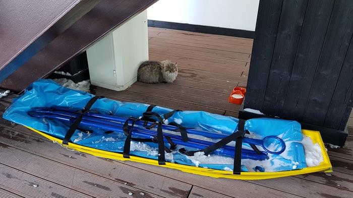 Высокогорный кот :) Кот, Горы, Альпика, Длиннопост, Домашние животные