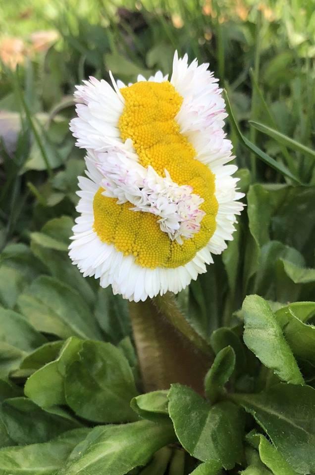 Когда цветок еще немного и гусеница