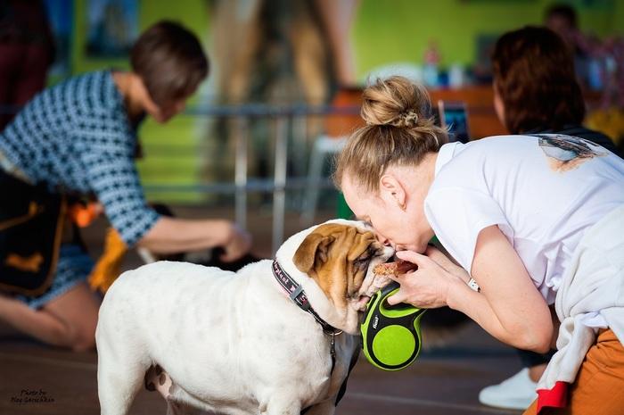 Продолжаю публиковать репортажные снимки с выставок собак, прошедших по Югу России в 2018 году, приятного просмотра))) Собака, Собаки и люди, Выставка, Выставка собак, Анималистика, Длиннопост